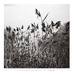 Affiche noir & blanc de Henri Silberman Grasses Prospect Park