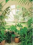 Photo murale d'intérieur plantes vertes (4 panneaux à coller)