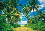 Photo murale de palmiers ( 8 panneaux à coller)