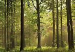 Photo murale d'une forêt en Automne (8 panneaux à coller)