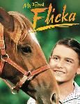 Affiche du film Mon amie Flicka