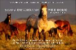 Affiche du documentaire Saving the American Wild Horse