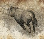 Poster taureau