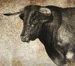 Affiche taureau