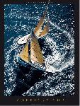Poster photo Circling - America's Cup