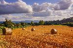 Photo paysage moisson sur les hauteurs du Tarn