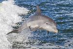 Poster photo d'un dauphin dans l'océan