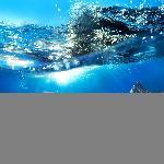 Poster photo dauphins dans l'océan