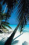 Poster plage sous palmier