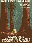 Affiche ancienne Sequoia National Park