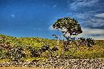 Photo arbre dans le paysage sud africain