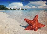 Photo étoile de mer plage Bahamas