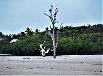 Photo arbre mort plage Bahamas