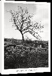 Toiles imprimées Photo Noir et blanc arbre en Cerdagne