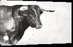 Toiles imprimées Poster taureau noir & blanc