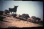 Toiles imprimées Poster paysage de séville avec son taureau