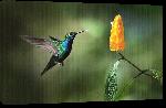 Toiles imprimées Poster oiseau
