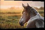 Toiles imprimées Poster cheval