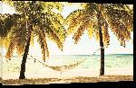 Toiles imprimées Affiche d'une plage avec hammac