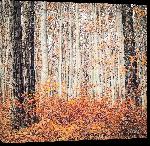 Toiles imprimées Photo arbre foret autrichienne à l'automne