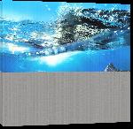Toiles imprimées Poster photo dauphins dans l'océan