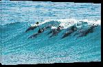 Toiles imprimées Photo banc de dauphins