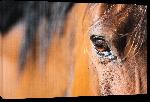 Toiles imprimées Photo œil de cheval