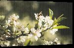 Toiles imprimées Photo abeille sur fleur