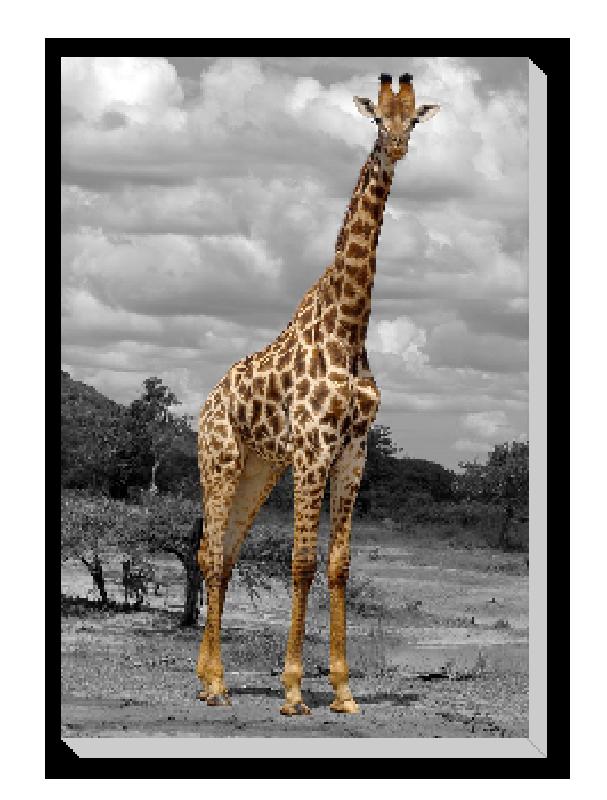 tableau imprim e sur toile photo girafe acheter tableau imprim e sur toile photo girafe 6535. Black Bedroom Furniture Sets. Home Design Ideas