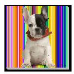 Tableau imprimée sur toile chien Lucky rayures multi