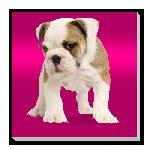 Tableau imprimée sur toile chien Brad fushia uni