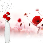 Photo en plexiglass de coquelicots