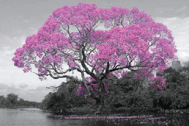 affiche d 39 un arbre au printemps acheter affiche d 39 un arbre au printemps 6953 affiches et. Black Bedroom Furniture Sets. Home Design Ideas