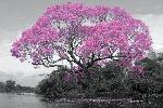 Affiche d'un arbre au printemps